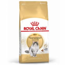 RC Norwegian Forest Cat Adult
